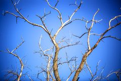 Dead dry branches of a tree against the sky Stock Images