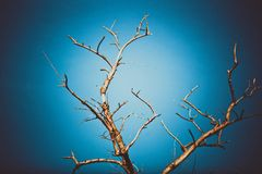 Dead dry branches of a tree against the sky in Stock Images