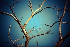 Dead dry branches of a tree against the sky in Royalty Free Stock Photos