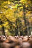 Dead dry brown leaves covering ground forest pathway in fall autumn season Stock Image