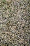 Dead dry grass Stock Photo