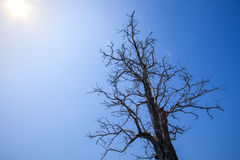Dead and dry tree Royalty Free Stock Images