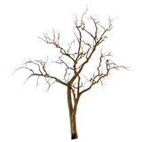 Dead and dry tree royalty free stock photo