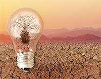 Dead dry tree in a light bulb Stock Photos