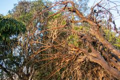 Dead or dry tree, lying in field stock photo