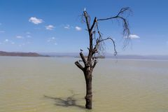 Dead dry tree in the middle of a lake stock photos