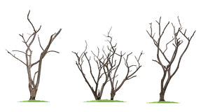 dead dry trees Royalty Free Stock Photography