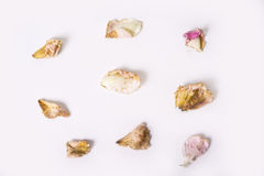 Dead dry up petals from roses on white bakground royalty free stock photos