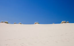 Dead dunes Royalty Free Stock Image