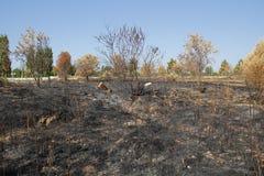 Dead environment after fire Stock Photos