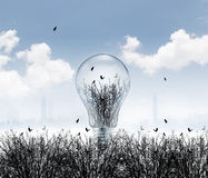 Dead environment and in light bulb dry nature on pollution background Stock Image