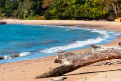 Dead fallen tree on the exotic beach of the island of Langkawi. royalty free stock image