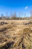 Dead Field in Winter Stock Image