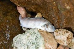 Dead Fish. On the Garda Lake in Italy stock photos