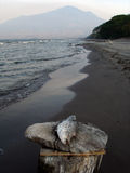 Dead fish. On the beach of Isla Ometepe (Nicaragua Royalty Free Stock Photos