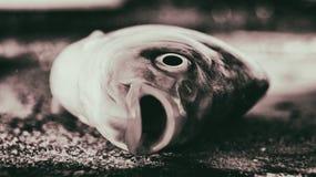 Free Dead Fish Stock Image - 57179941