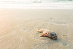 Dead fish on the beach Stock Photography