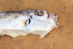 Dead fish Stock Photos