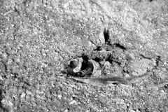 Dead Fish Black and White Stock Photo