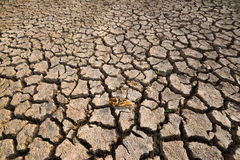 Dead fish dry land global warming crisis Royalty Free Stock Images