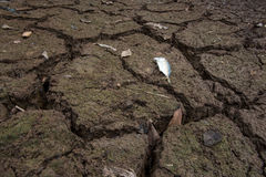 Dead fish, dry land, World Disaster, Cracked ground background Stock Photos