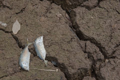 Dead fish, dry land, World Disaster, Cracked ground background Royalty Free Stock Image