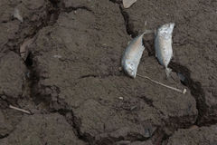 Dead fish, dry land, World Disaster, Cracked ground background Stock Photo