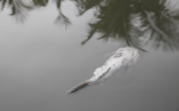 Dead fish floated in the water Stock Images