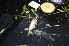 Dead fish and garbage floating on the surface of the river Stock Photos