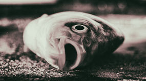 Dead fish. July 27h 2015 Stock Image