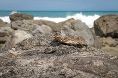 Dead Fish. New Zealand shoreline in lower north island Stock Photo
