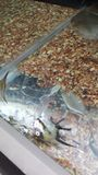 Dead Fish at Pet Store Stock Photography