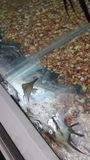 Dead Fish at Pet Store Royalty Free Stock Images