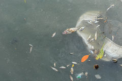 Dead fish in the sea Royalty Free Stock Photos