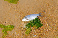 Dead fish Stock Images