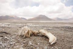 Dead flamingo Stock Images