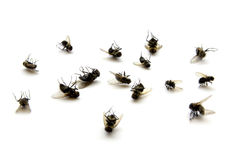 Dead Flies Royalty Free Stock Image