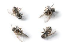 Dead flies Stock Image