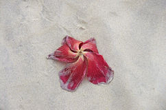 A dead flower on the beach Royalty Free Stock Photography