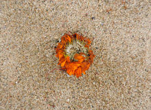 Dead flower garland on sea sand Stock Images