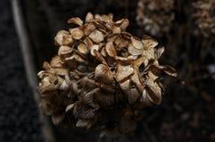 Dead flower in winter season royalty free stock images