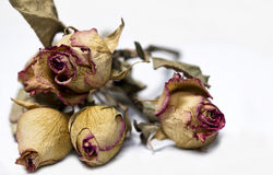 Dead Flowers Royalty Free Stock Photography