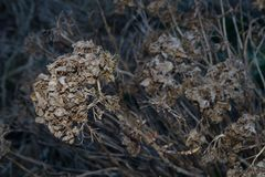 Dead flowers Stock Photos