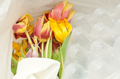 Dead flowers in a garbage bag Stock Photos