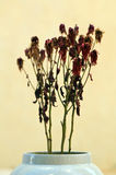 Dead flowers in vase Royalty Free Stock Image