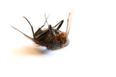 Dead Fly stock images