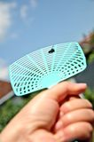 Dead fly on a flyswatter. Dead fly on a plastic flyswatter Royalty Free Stock Photos