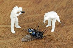Dead Fly Scene Stock Image