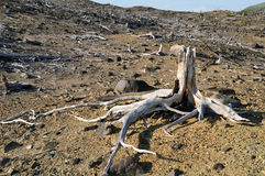 The dead forest Stock Photo