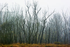 The dead forest. In fog Royalty Free Stock Photos